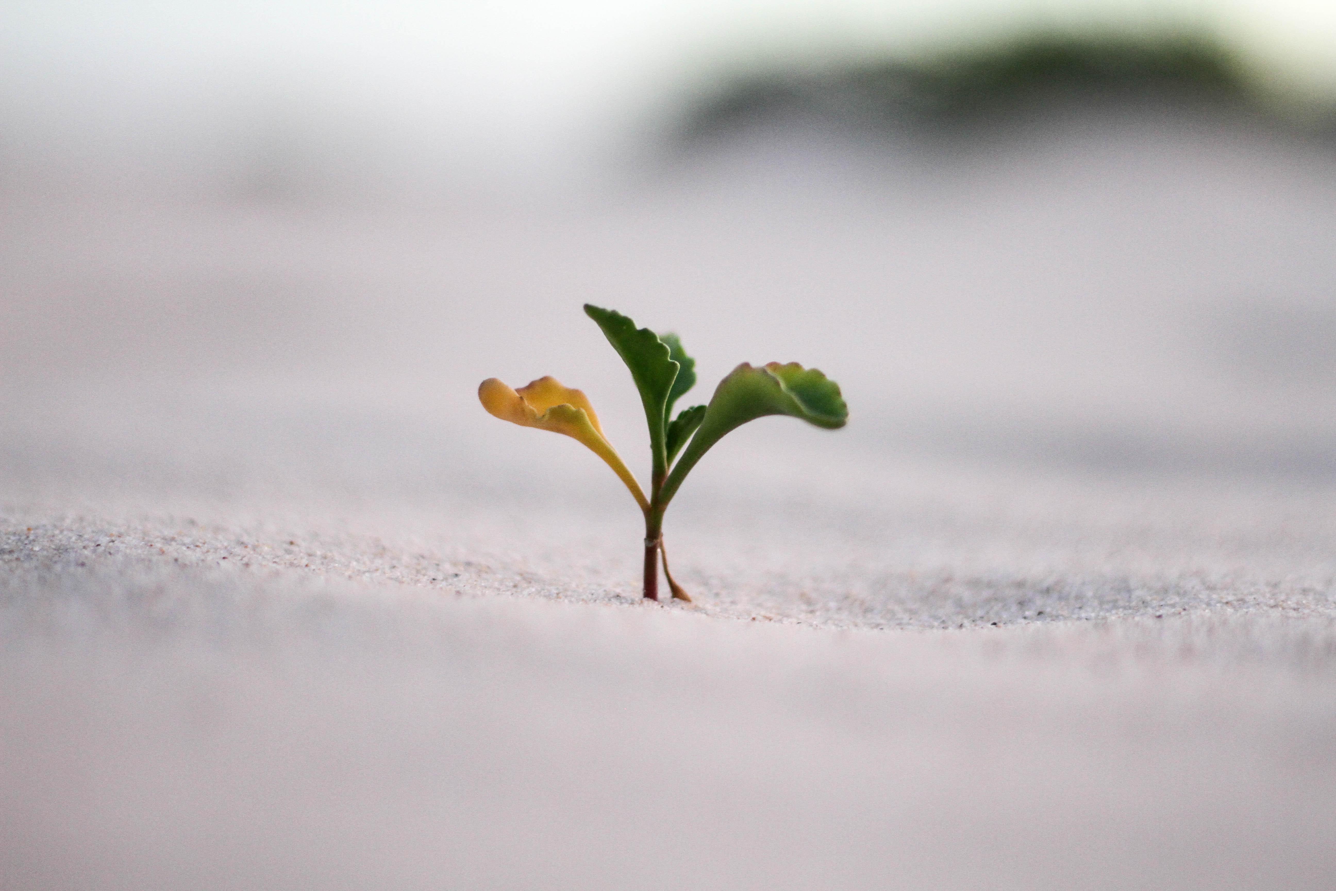 proceso de crecimiento